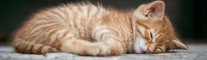 hoe slaap je het beste